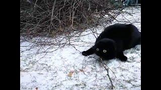 Cat Discovers Snow || ViralHog