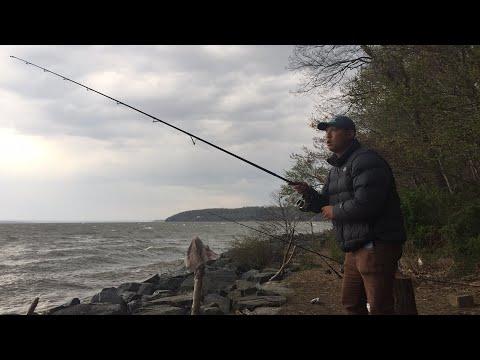 LIVE! Striper fishing from shore BTS