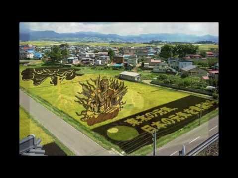 Japanese Rice Field Art (田んぼアート)