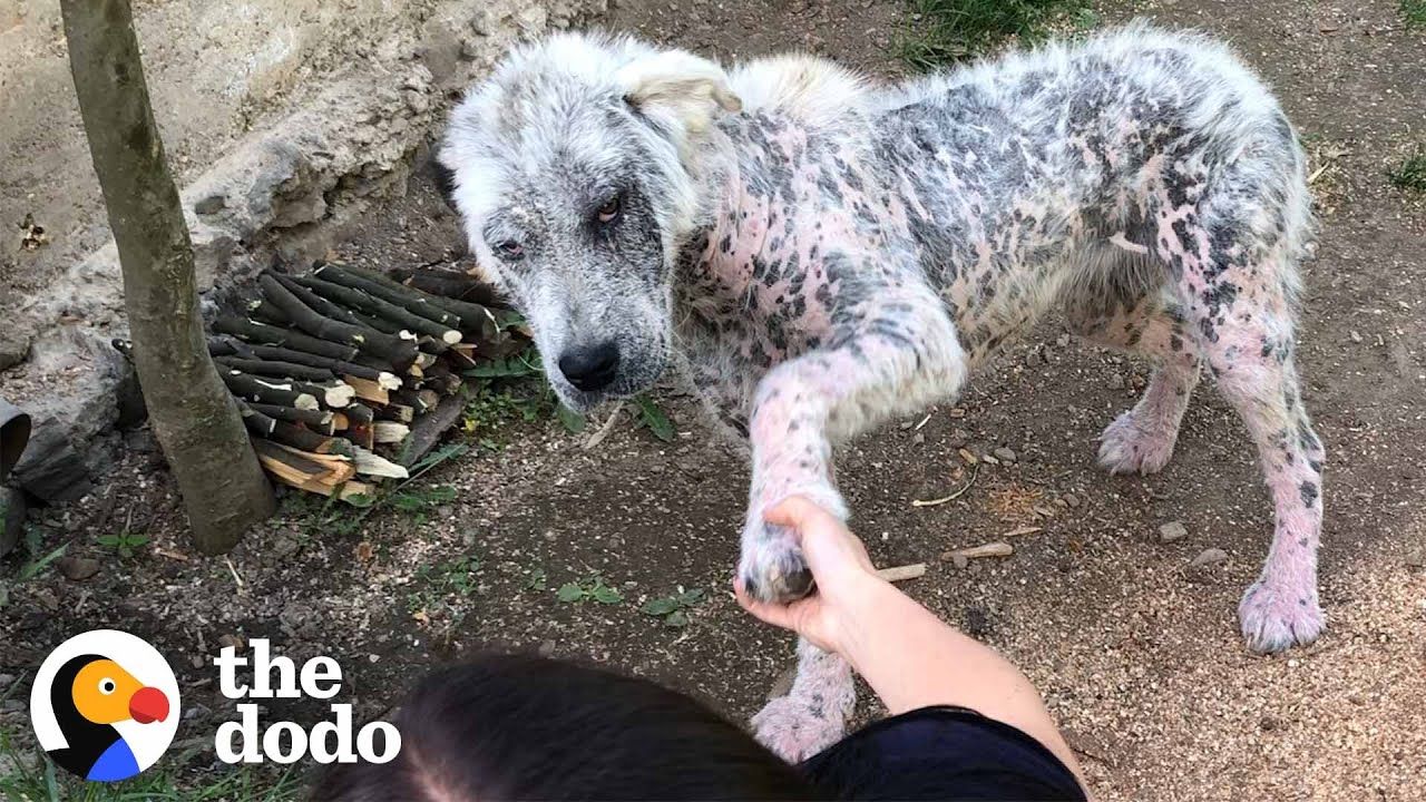 Friendly Stray Dog Refuses To Be Rescued Without Her Best Friend | The Dodo