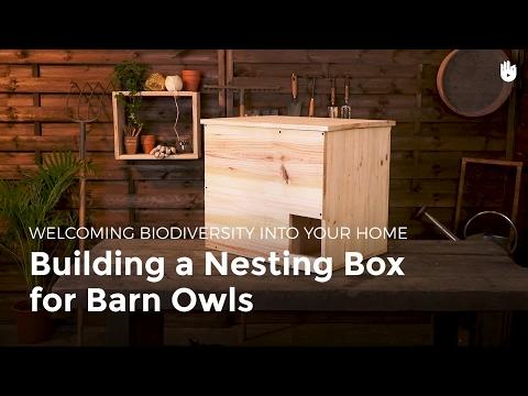 Building a Nesting Box for Barn Owls | Biodiversity
