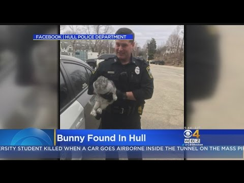 Easter Bunny? Hull Police Search For Owner Of Lost Rabbit