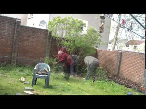 MY Gardening....back yard clean up