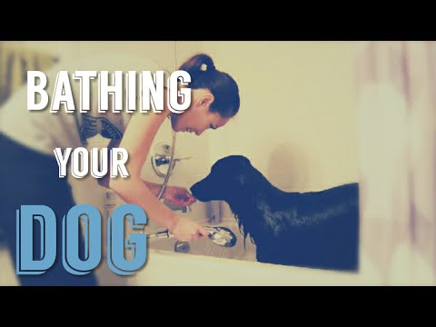 Bathing A Dog - Tips to make giving your dog a bath EASIER