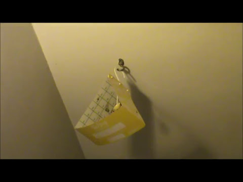 how to get rid of your moths? read, click and do it fast!