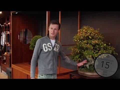 Teunis Jan Klein: Techniques to thicken a Bonsai trunk
