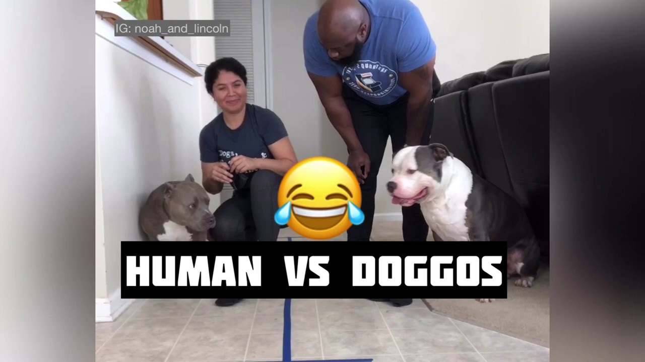 Which human can put all 4 shoes on their dog the fastest? SA - Dad goes down hard!