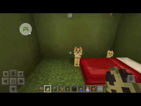 How to turn an Ocelot into a cat - Minecraft