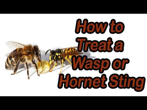 How to Treat a Wasp or Hornet Sting- Treat Hornet Wasp Sting | Healthy Life Styles