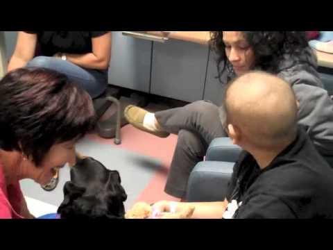 What is the Pet Prescription Team