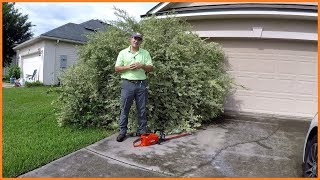 This Shrub Is So Big They Can