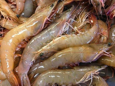 Organic Wild Shrimp {Catch Clean Cook} Plus a complete surprise in the Blue Crab Traps!!!
