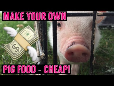 Mini Pig / Pot Belly Pig make your food - Save Money! DIY Potbellied pig