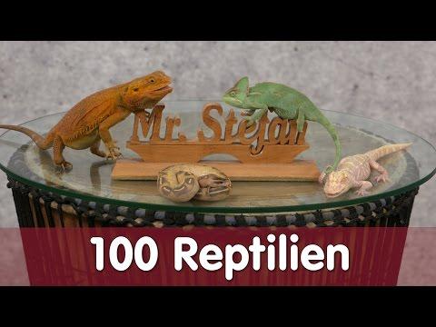 Reptil TV - Folge 100 - 100 tolle Reptilien