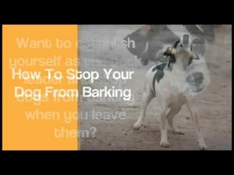 how to stop dog barking at night | best dog training