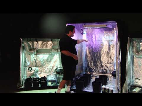 Triple Threat Grow Tents | Advanced Hydroponic Growing