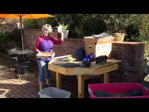 Making Lavender Bundles