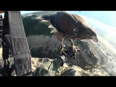 Parahawking. Fly with a bird