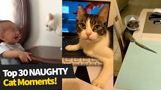 Top 30 NAUGHTY Cats Compilation 2021 | Evil Cat Moments