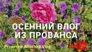 Франция/vlog/Осиное ГНЕЗДО/Баранья ЛОПАТКА/ЖИЗНЬ собачья/provenceallochka
