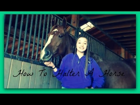 How To Halter A Horse