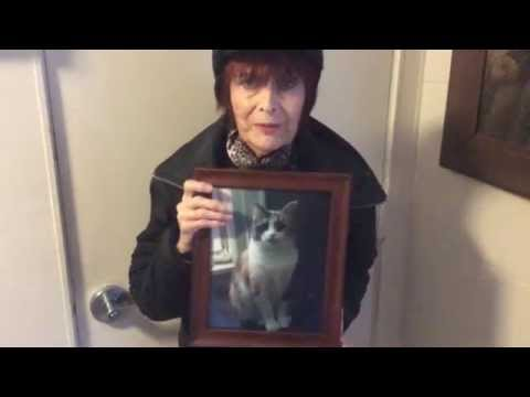 June's video message thanking gofundme supporters - Janice the Cat