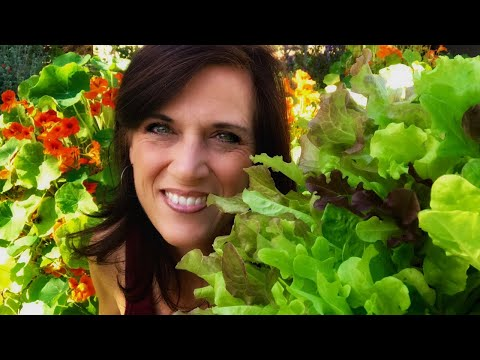 🍅 LIVE: 4 Tips to Grow Lettuce intheHeat, LIVE Q & A (REPLAY)