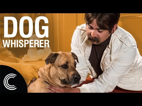 The Dog Whisperer with Farley Archer: Rescue Dogs