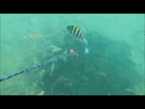 Amazing fish trap in sea# GoPro in bait trap