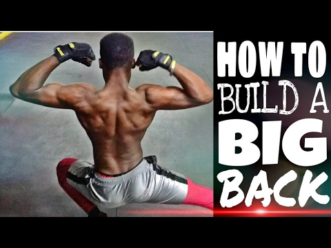 HOW TO BUILD COBRA BACK ( BEGINNERS )