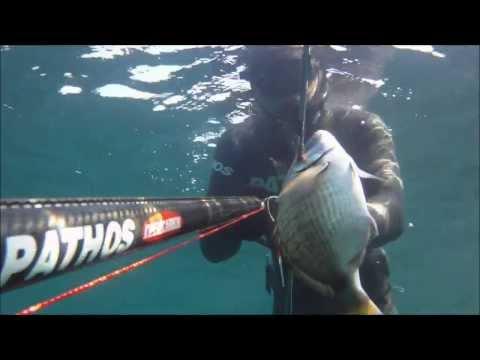 Spearfishing | Catching White Seabream