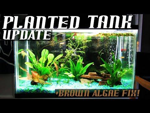 10g Planted Tank | Update | Brown Algae FIX !!