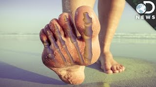 Why Did Our Toes Evolve To Look So Weird? #AskDNews