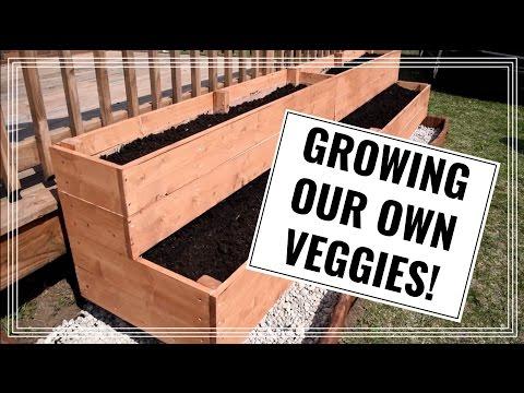 Growing Our Own Veggies! | DIY Raised Vegetable Garden