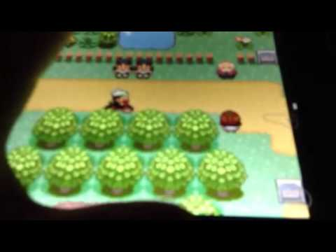 How to get lots of eggs in Pokemon emerald