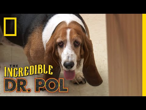 Bailey the Trash Eating Dog | The Incredible Dr. Pol