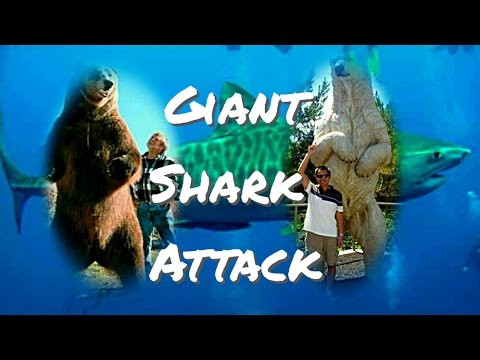 Tiger Shark Attack | Ocean Apex Predators | Shark Attacks Turtle (Ocean Maverick)