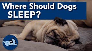 Where Should Dogs Sleep?
