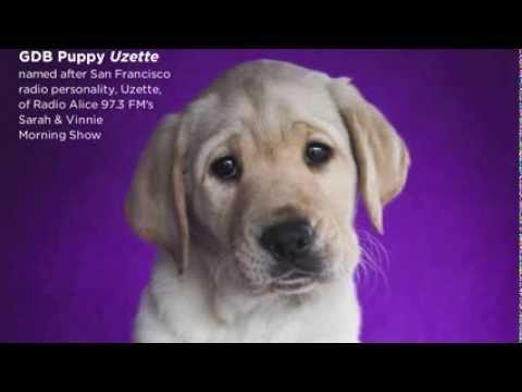 Guide Dog Puppy Uzette
