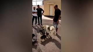 גניבת הכלבים בנתיבות / צילום: משטרת ישראל / ברנז'ה חדשות