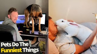 Pets Do The Funniest Things Compilation 2021 (Funny Animal Videos)