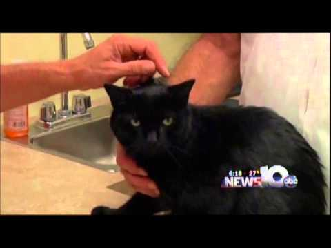 Pet Connection Extra - Cardiac Disease in Cats