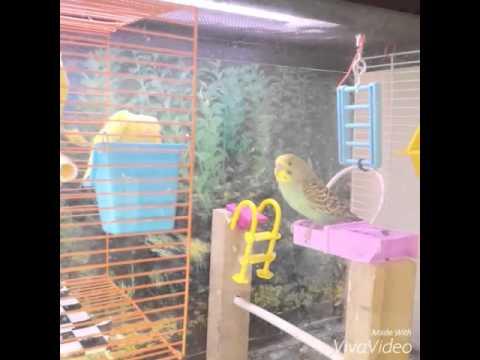 Parakeet bird cage