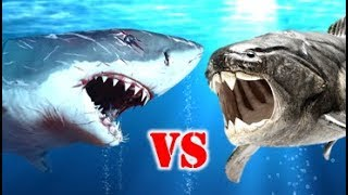 Megalodon Vs Dunkleosteus Who Would Win?