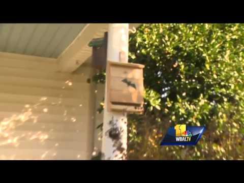 Sunday Gardener: Preparing bird houses for winter
