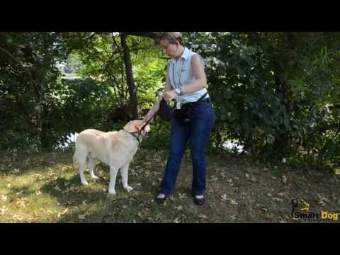 A Guide to Choosing the Proper Dog Leash
