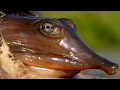 {GRAPHIC} Soft Shell Turtle! Catch, Clean, Cook! Tasty Tuesday!!!
