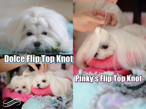 GROOMING: Dolce Flip Top Knot Tutorial ~ Korean Cut Maltese Top Knot Flip ~ Cute Maltese Hairstyles