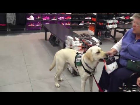 How a Service Dog Buys Socks