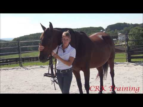 How to Bridle a Horse